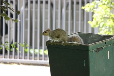 ゴミ箱とリス