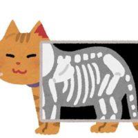 猫のレントゲン