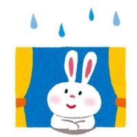 雨を見るウサギ