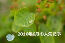 雨露ののった葉