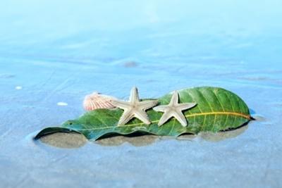 砂浜とヒトデ