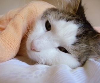 眠れない猫。
