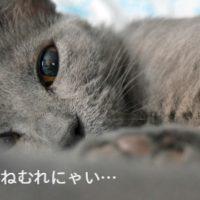 眠れない猫