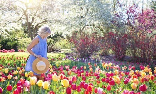 チューリップの咲く庭