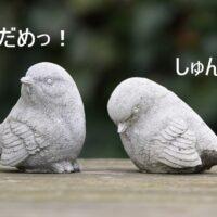 拒絶された鳥